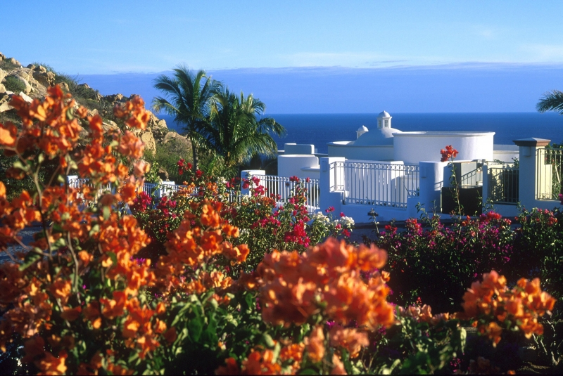 Flowers overlooking the Pacific Ocean
